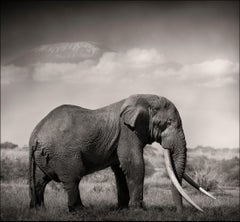 Tim's Land, a Tribute to the icons of Africa, Elephant, wildlife, blackandwhite