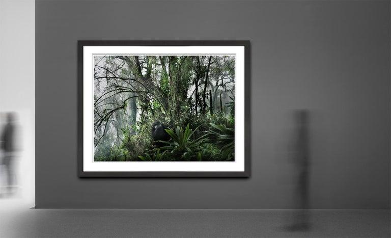Volcano II, Rwanda, Gorilla, Contemporary, Jungle - Black Black and White Photograph by Joachim Schmeisser