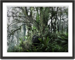 Volcano II, Rwanda, Gorilla, Contemporary, Jungle
