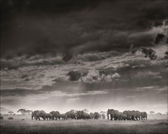 Weather the storm, Kenya, Elephant, wildlife, b&w photography
