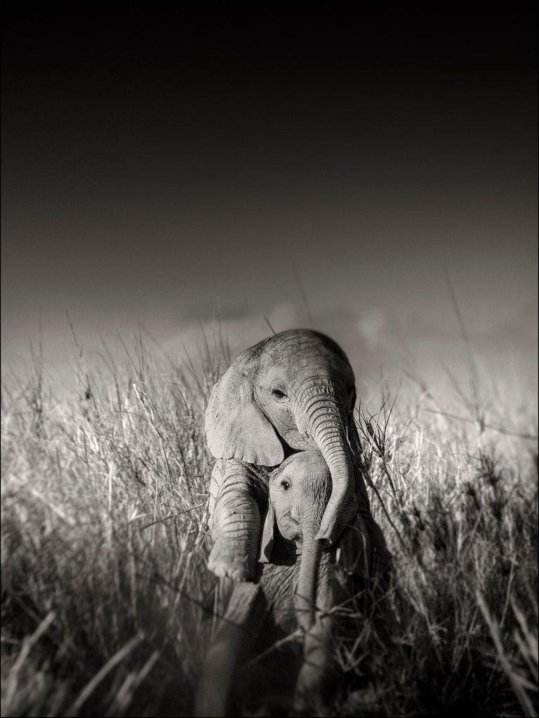 Wild elephant babies playing I, contemporary, wildlife, b+w photography - Photograph by Joachim Schmeisser