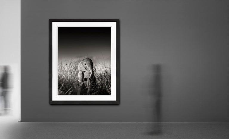 Wild elephant babies playing I, contemporary, wildlife, b+w photography - Contemporary Photograph by Joachim Schmeisser