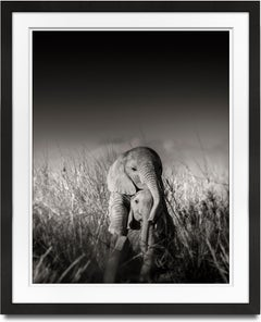 Wild elephant babies playing I, contemporary, wildlife, b+w photography