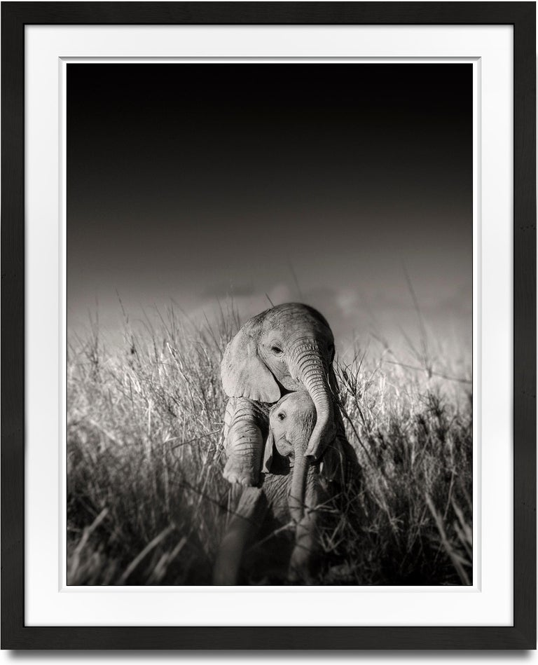 Joachim Schmeisser Black and White Photograph - Wild elephant babies playing I, contemporary, wildlife, b+w photography