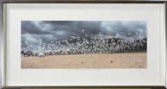 'Lake Michigan Seagulls in Flight #2' original photograph signed by Joan Dvorsky