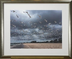 """Lake Michigan Seagulls In Flight #6,""Photography signed by Joan Dvorsky"