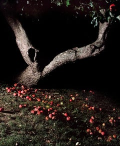 Apple Tree at Night, 2016 - Jocelyn Lee (Colour Photography)