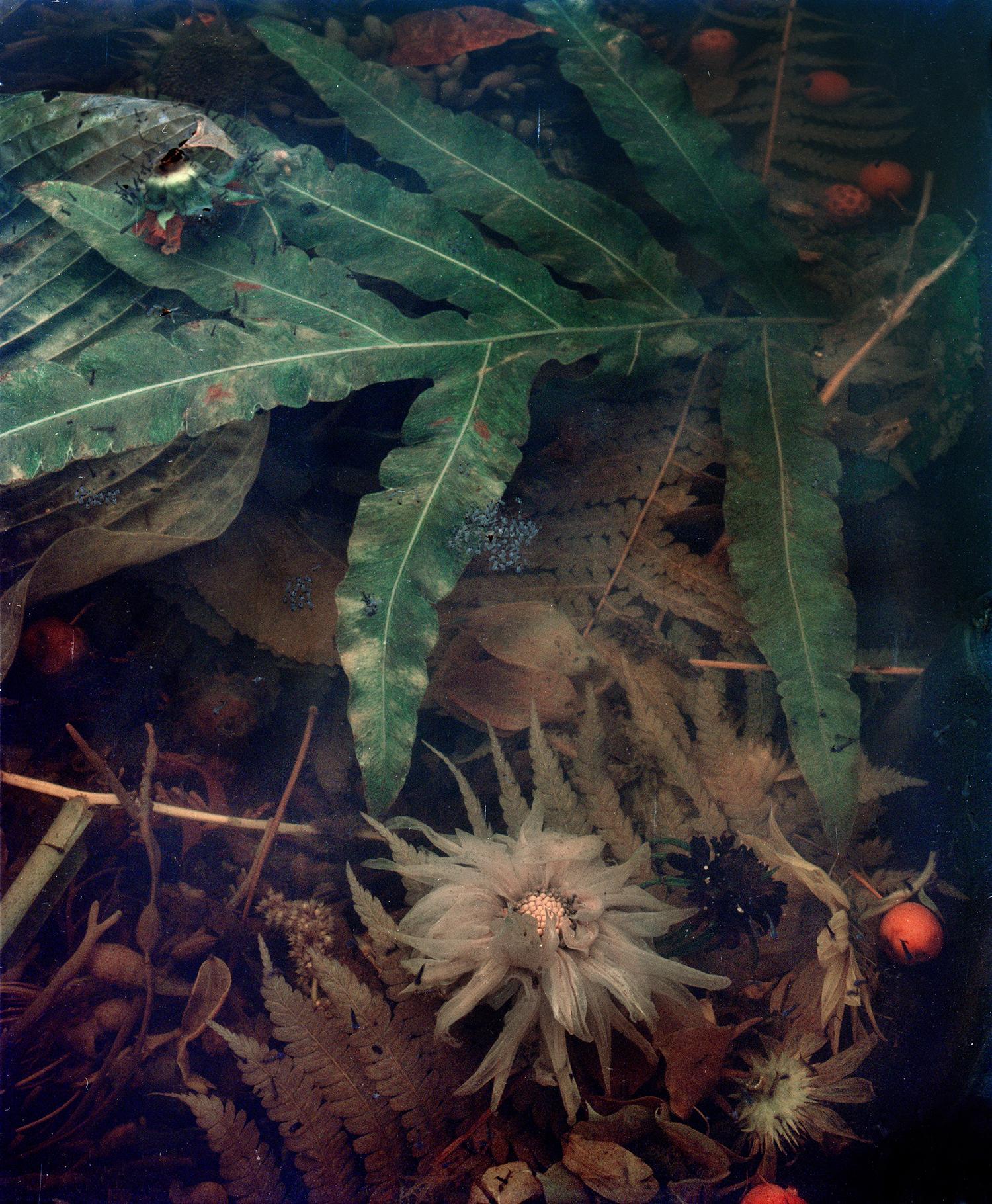 Dark Matter #8, Decomposing Dahlia, 2017 - Jocelyn Lee (Colour Photography)