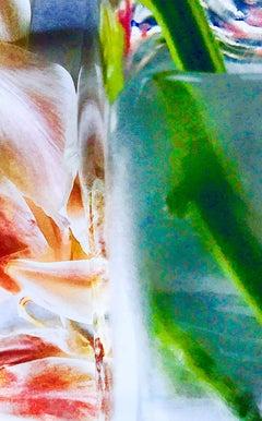 Petals & Stems