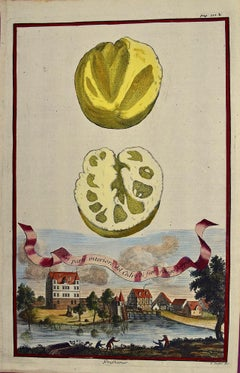 """Early 18th C. Volckamer Hand-colored Engraving of Lemons """"La parte interiore"""""""