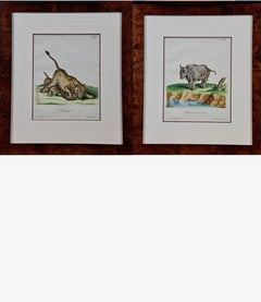 A Pair of Hand Colored Engravings of an African Lioness and her Cubs and a Rhino