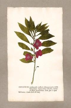 "Botanica in Originali, seu Herbarium Vivum - ""Nature Printed Plants"" -10"