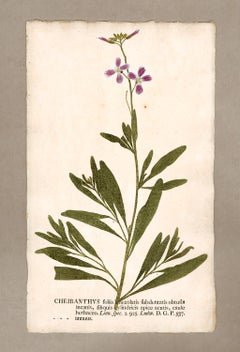 "Botanica in Originali, seu Herbarium Vivum - ""Nature Printed Plants"" -11"