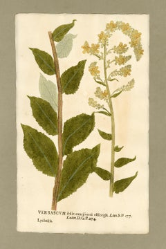 "Botanica in Originali, seu Herbarium Vivum - ""Nature Printed Plants"" -13"