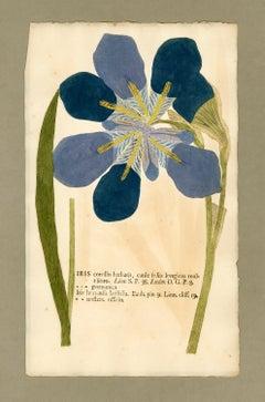 "Botanica in Originali, seu Herbarium Vivum - ""Nature Printed Plants"" -14"