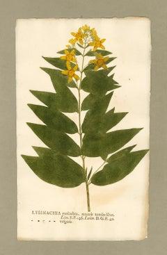 "Botanica in Originali, seu Herbarium Vivum - ""Nature Printed Plants"" -15"