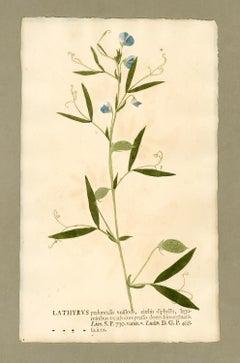 "Botanica in Originali, seu Herbarium Vivum - ""Nature Printed Plants"" -16"