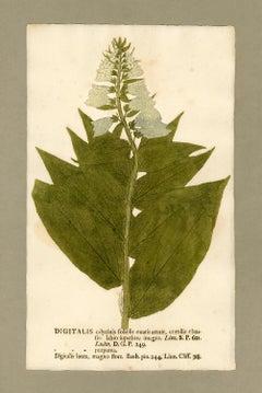 "Botanica in Originali, seu Herbarium Vivum - ""Nature Printed Plants"" -18"