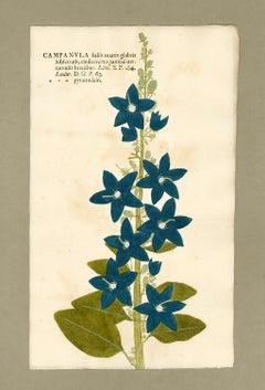 "Botanica in Originali, seu Herbarium Vivum - ""Nature Printed Plants"" -19"