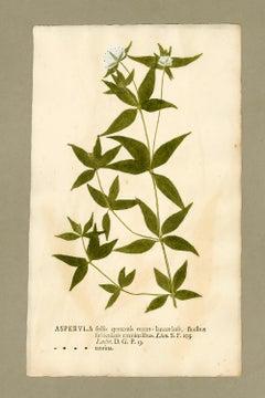 "Botanica in Originali, seu Herbarium Vivum - ""Nature Printed Plants"" -20"