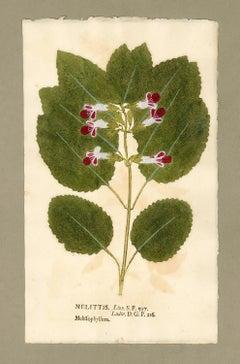 "Botanica in Originali, seu Herbarium Vivum - ""Nature Printed Plants"" -21"