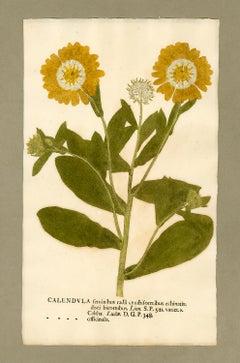 "Botanica in Originali, seu Herbarium Vivum - ""Nature Printed Plants"" -22"