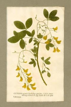 "Botanica in Originali, seu Herbarium Vivum - ""Nature Printed Plants"" -23"