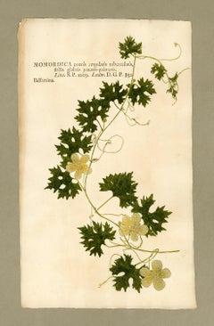 "Botanica in Originali, seu Herbarium Vivum - ""Nature Printed Plants"" -25"