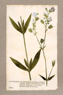 "Botanica in Originali, seu Herbarium Vivum - ""Nature Printed Plants"" -3"