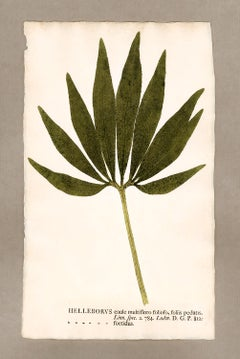 "Botanica in Originali, seu Herbarium Vivum - ""Nature Printed Plants"" -4"
