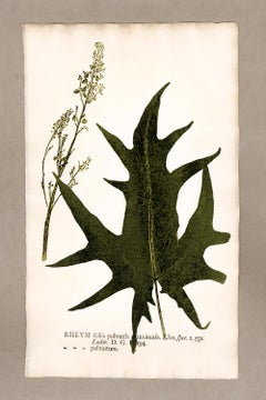 "Botanica in Originali, seu Herbarium Vivum - ""Nature Printed Plants"" -5"
