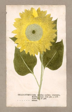 "Botanica in Originali, seu Herbarium Vivum - ""Nature Printed Plants"" -6"