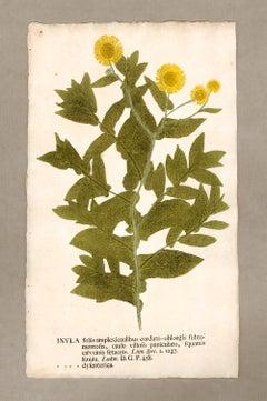 "Botanica in Originali, seu Herbarium Vivum - ""Nature Printed Plants"" -7"