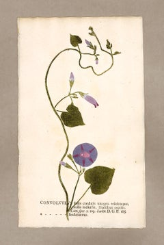 "Botanica in Originali, seu Herbarium Vivum - ""Nature Printed Plants"" -9"