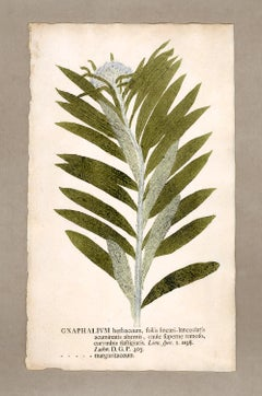 "Botanica in Originali, seu Herbarium Vivum - ""Nature Printed Plants"" -1"