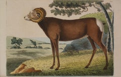 The Antelope