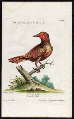 Red-Checked Woodpecker by Seligmann - Handcoloured etching - 18th century