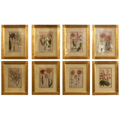 Johann Weinmann Eight Mezzo Tint Copper Plate Engraving Fine Frames