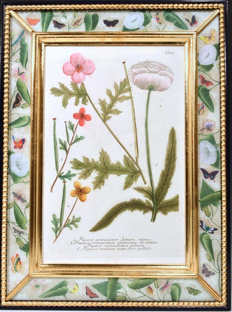 Johann Weinmann Engravings of Flowers, a Set of Twelve, circa 1740 6