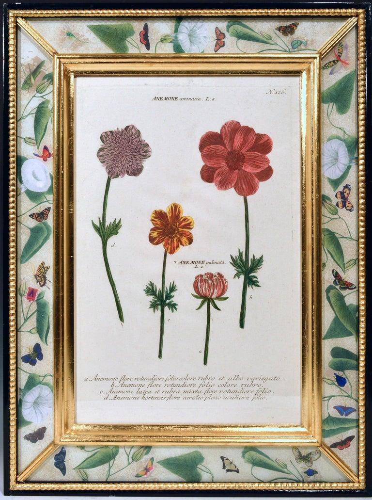German Johann Weinmann Engravings of Flowers, a Set of Twelve, circa 1740