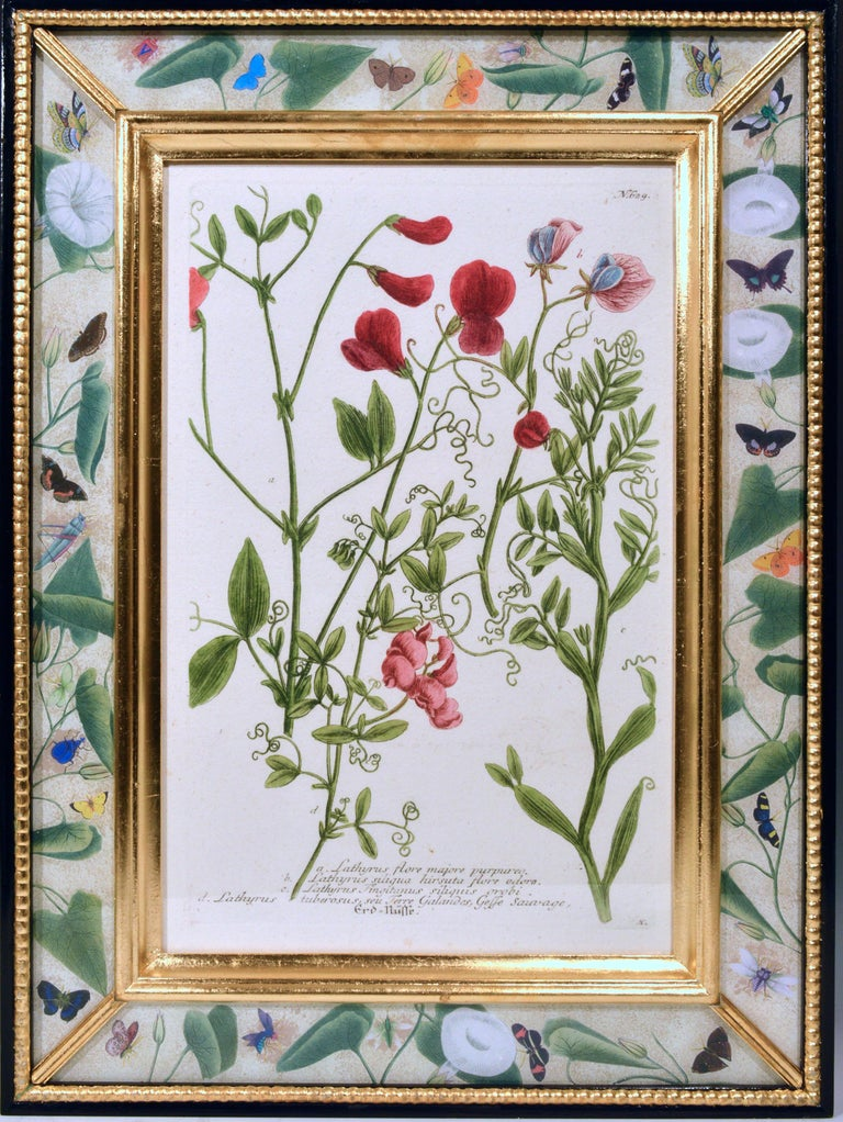 Johann Weinmann Engravings of Flowers, a Set of Twelve, circa 1740 In Good Condition In Downingtown, PA