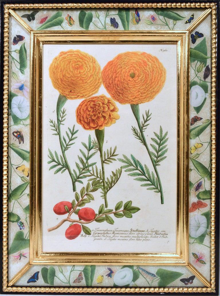 18th Century Johann Weinmann Engravings of Flowers, a Set of Twelve, circa 1740