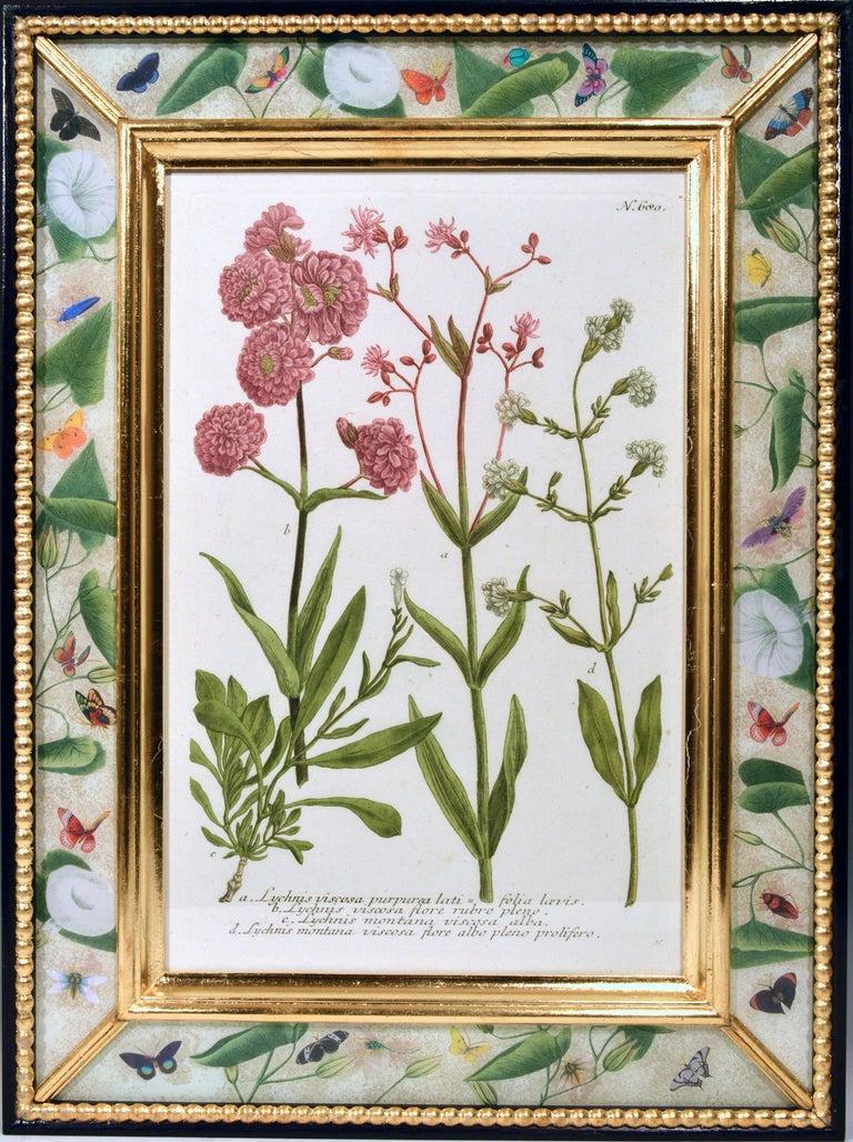 Paper Johann Weinmann Engravings of Flowers, a Set of Twelve, circa 1740