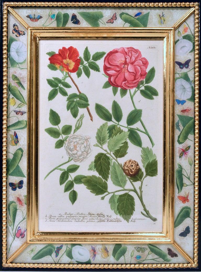 Johann Weinmann Engravings of Flowers, a Set of Twelve, circa 1740 1