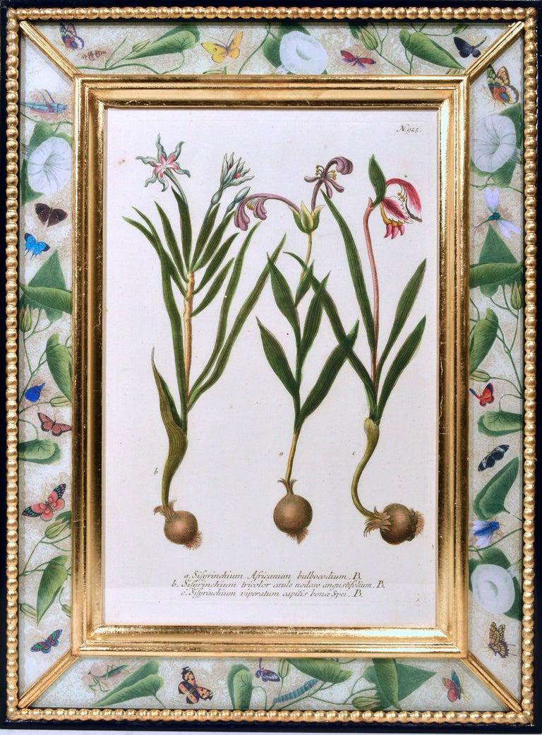 Johann Weinmann Engravings of Flowers, a Set of Twelve, circa 1740 2