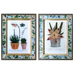 Johann Weinmann Pair of Botanical Prints with Plants in Pots, Engraved by Ehret