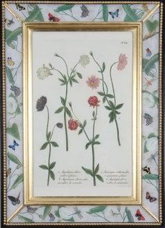 Johann Weinmann: c18th Botanical Engravings in Decalcomania Frames