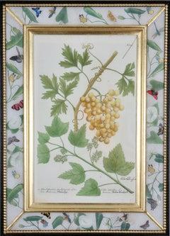 Johann Weinmann: c.18th Engraving of Fruit in a Decalcomania Frame.