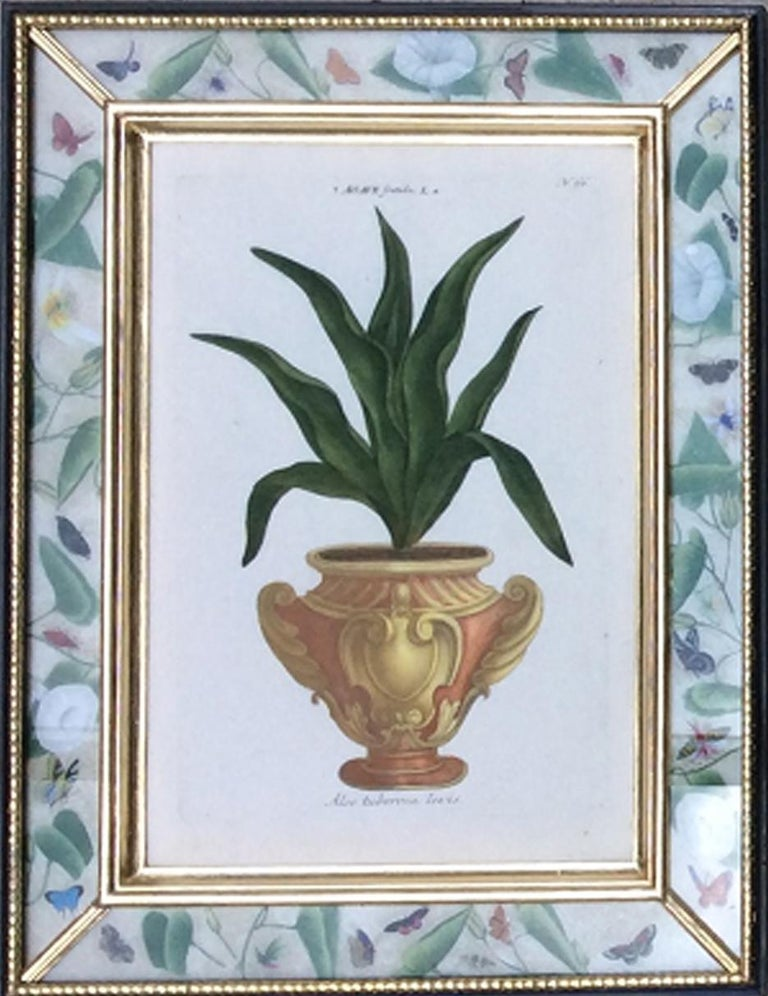 Johann Weinmann Set of Six Botanical Prints with Plants in Pots Engraver, Ehret In Good Condition For Sale In Downingtown, PA