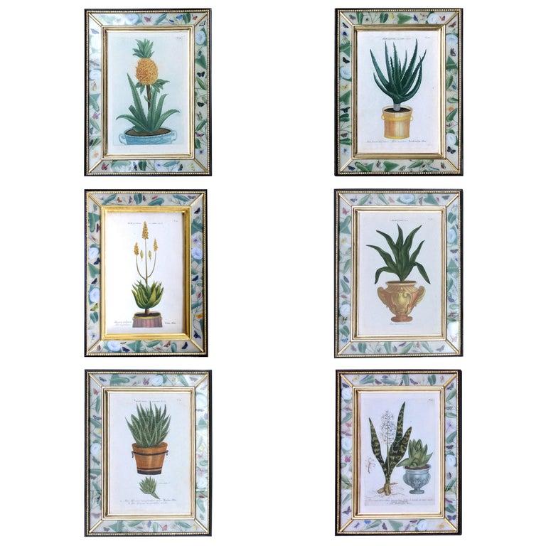 Johann Weinmann Set of Six Botanical Prints with Plants in Pots Engraver, Ehret For Sale